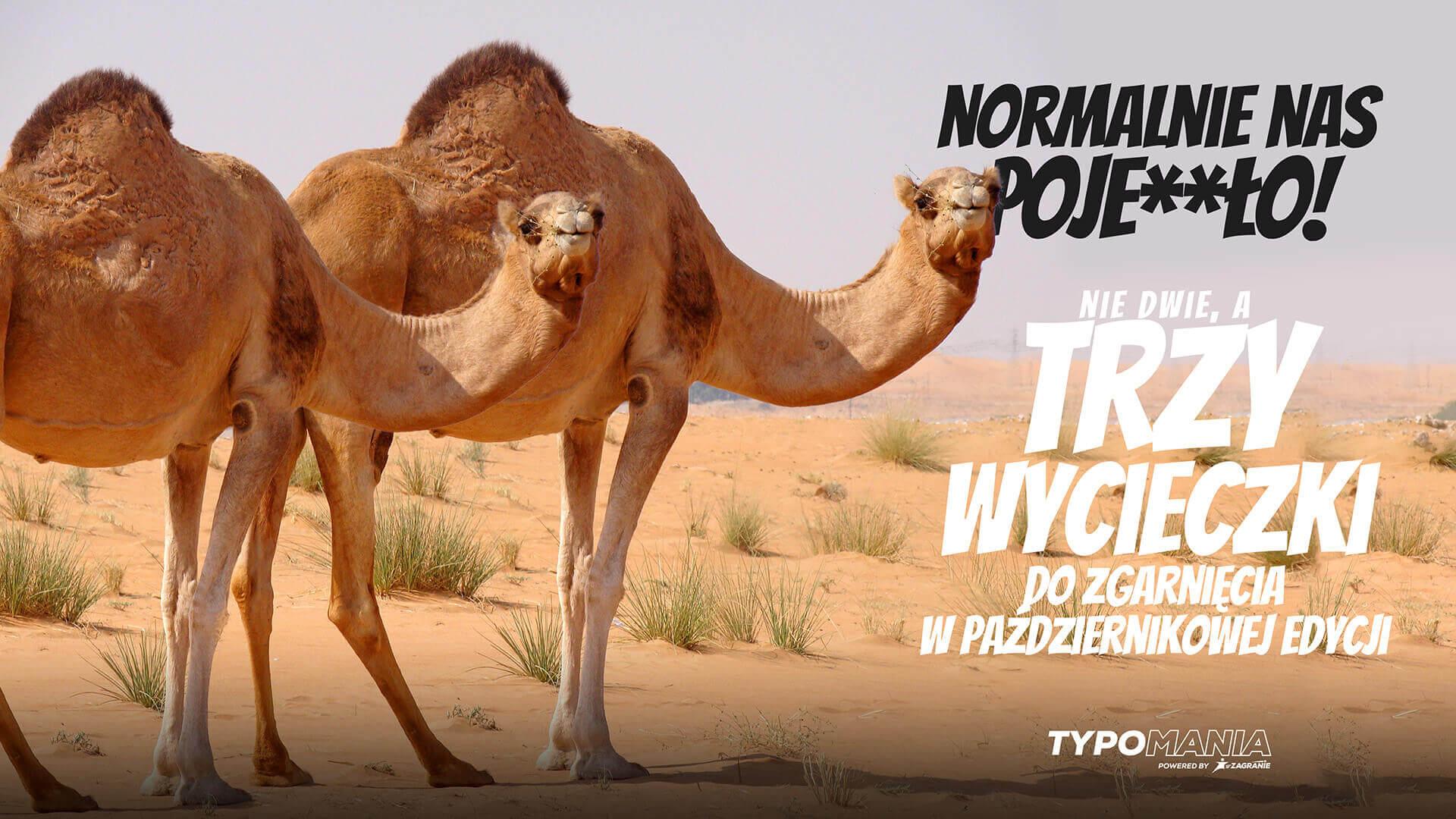 Typomania - wycieczki