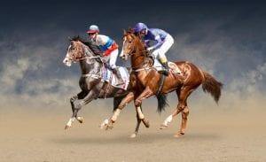 wyścigi koni