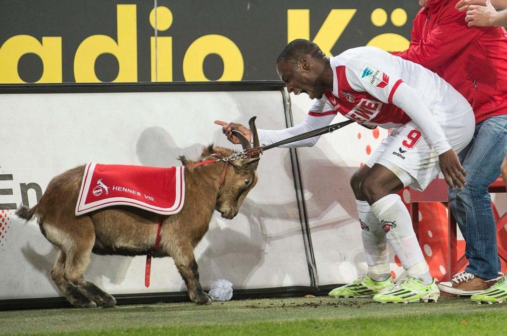 Hennes VIII maskotka FC Köln