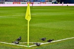 Flaga przy rzucie rożnym z gołębiami